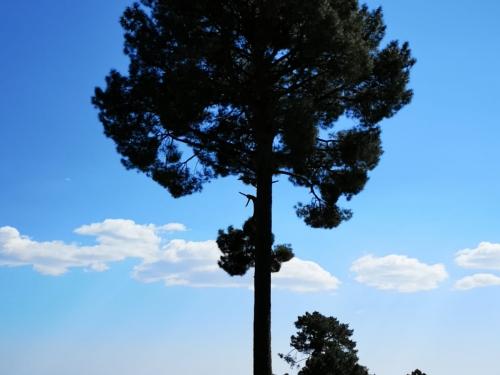 Ruta guiada de los árboles centenarios. III Jornadas Medioambientales