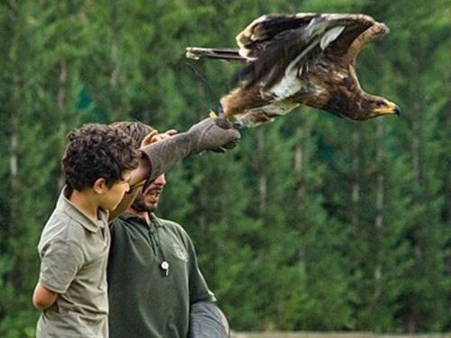 Jornada ornitológica - III Jornadas Medioambientales