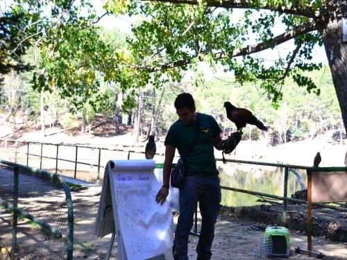 Jornada ornitológica - V Jornadas Medioambientales